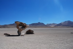 Roca de Arbol in desert of Bolivia