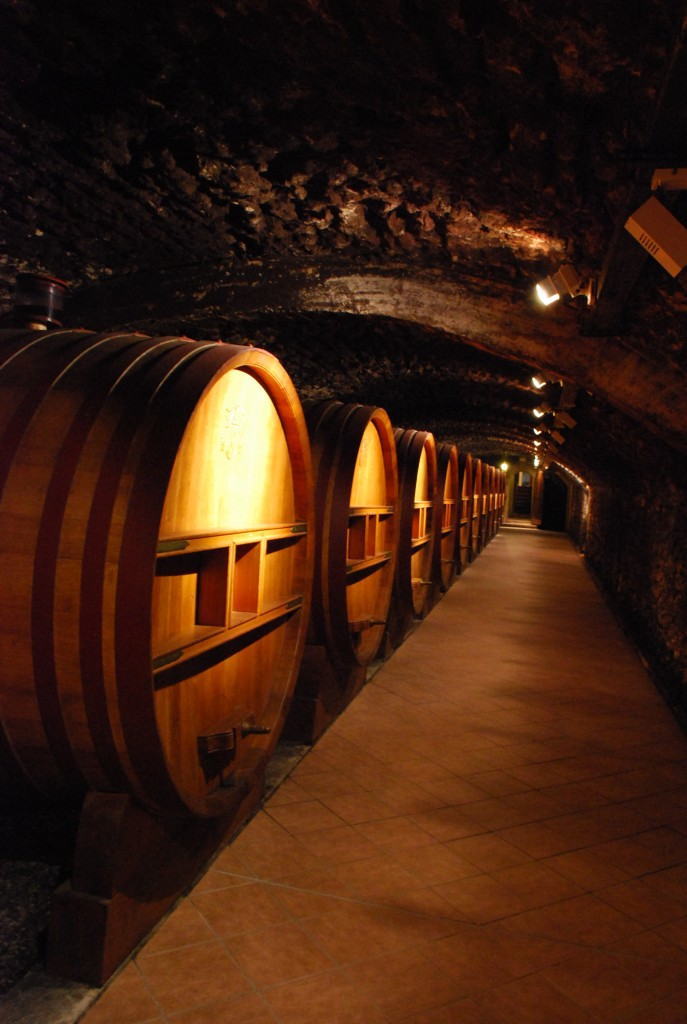 Barrels in chateuneuf du pape France