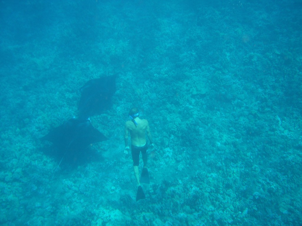 Swimming with manta rays in Ukumehame Maui
